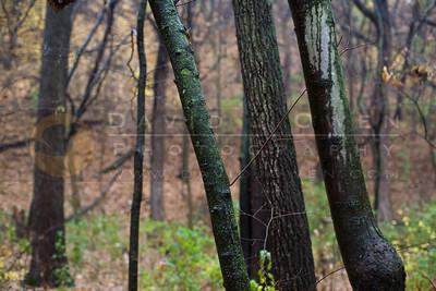 20081106-037 Trees