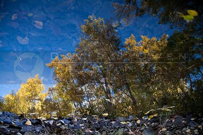 200901009-053 Creek reflection