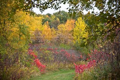20081012-034 Hyland Lake Park fall color