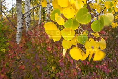 20081012-049 Hyland Lake Park fall color