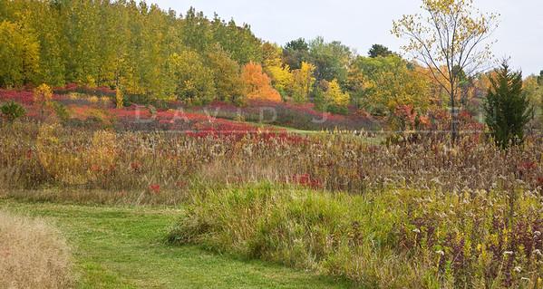 20081012-033 Hyland Lake Park fall color