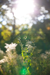 20111001-056 Sun in oak savannah