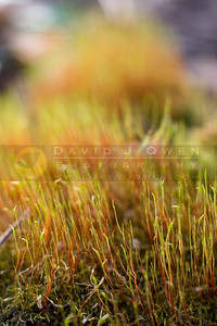 042107-021 Moss