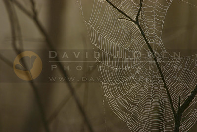 052805-10V-2 Spider web and Alder