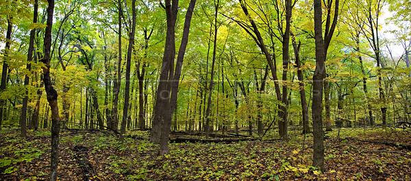 20091014-089 Woods pano