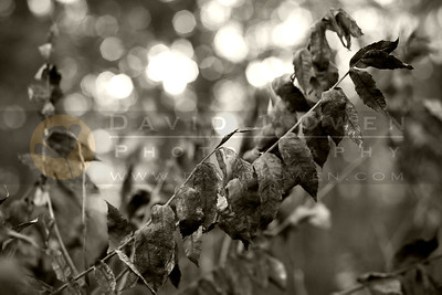 100307-045 Sumac leaves