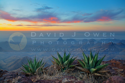 20120314-049-1-1 S Rim sunrise and agave HDR