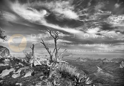 20120312-156-1 Tree and S Rim view pano