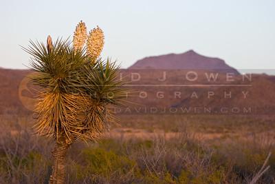 20090205-023 Yucca & Bofe Peak