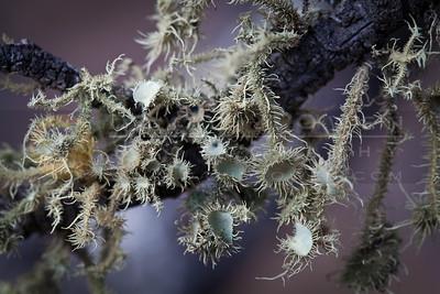 20120313-230 Lichen