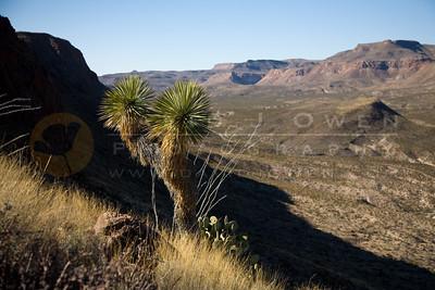 20090202-004 Colorado Mesa y Bofecillos