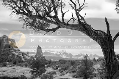 20090320-070 1 View towards La Sal Mtns