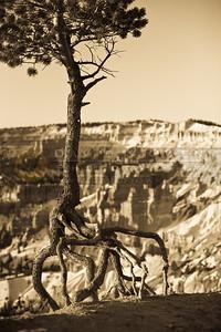 20090317-013 Sunrise point tree