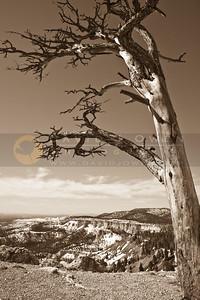 20090317-090 Yovimpa Point & tree-2