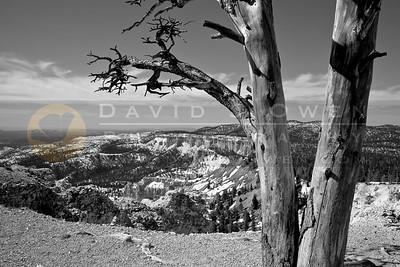 20090317-085 Yovimpa Point & tree-2