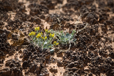 20090319-018 Cryptobiotic soil &