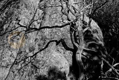 20090315-064 Boulder & tree