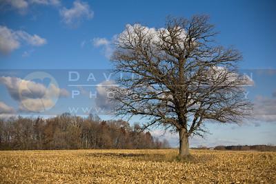 20081117-007 Tree on 4 Mile