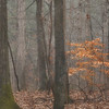 Crabtree Forest