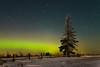 114 Solitary Spruce Aurora
