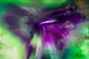 169 Aurora Borealis Butterfly