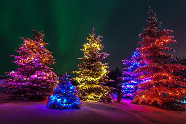 182 Christmas Aurora