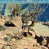 Arizona's Grand Canyon West Rim view.