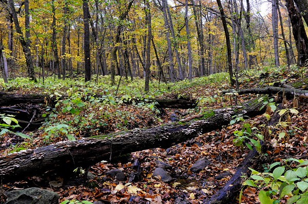 White Pine Hollow State Forest 008