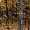 Ledges State Park 10-19-2014 031