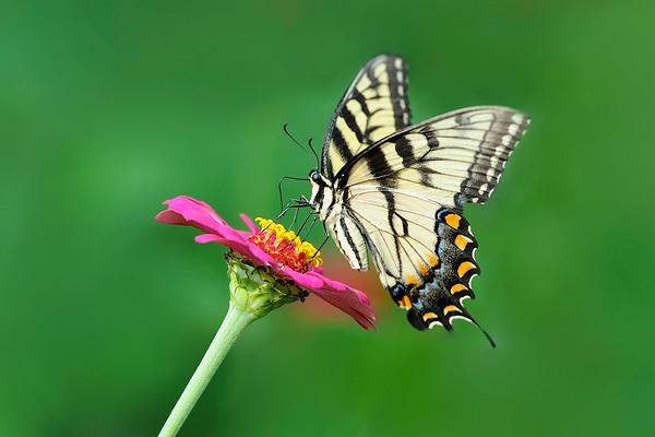 Saylorville Butterfly Garden 8-4-14 078