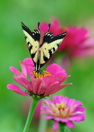 Saylorville Butterfly Garden 8-4-14 007