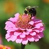 Saylorville Butterfly Garden 8-12-2017 099