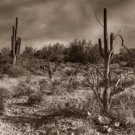 Sepia image of the Arizona Desert