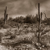 Sepia image of the Arizona Desert