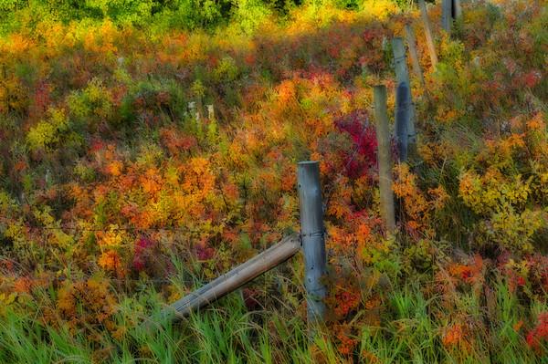 Impressionist Autumn Colors