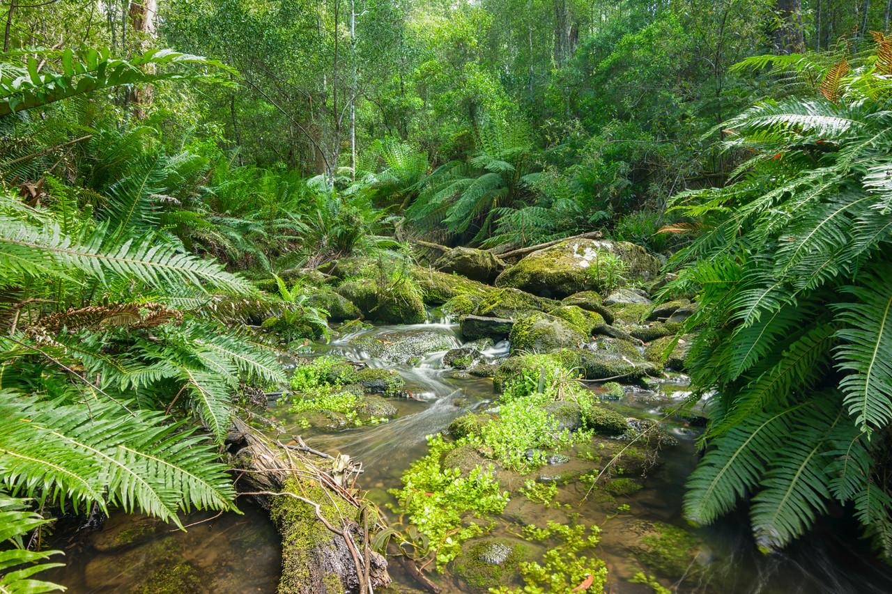 Great Otways National Park