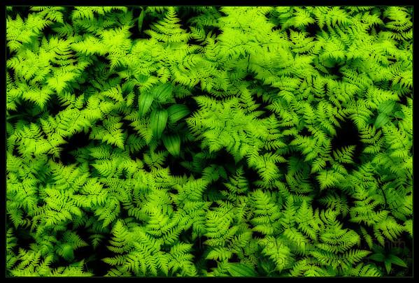 Rainy forest floor detail - Orton effect