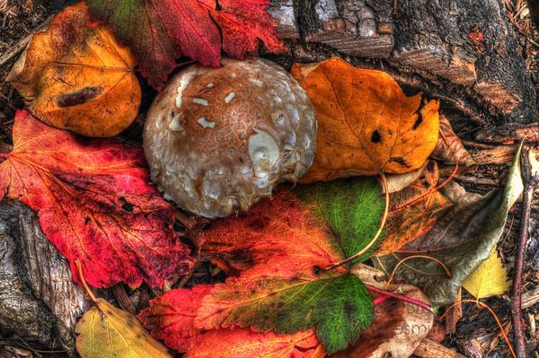 Autumn Color Closeup