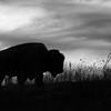 Neal Smith National Wildlife Refuge 11-29-2017 341