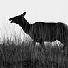 Neal Smith National Wildlife Refuge 05-22-2016 191