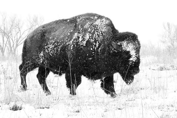 Neal Smith National Wildlife Refuge 4-15-2018 113