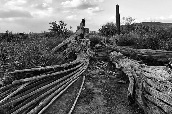 Arizona Mountain Range 2018 109