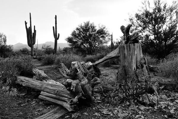 Arizona Mountain Range 2018 105