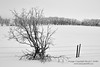 Stark winter farmer's field in black-and-white