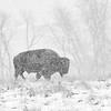 Neal Smith National Wildlife Refuge 4-15-2018 052