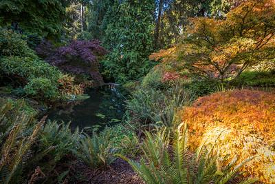 Arboretum- Fall