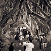 The Busy Dark Hedges