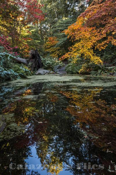 Arboretum Zen