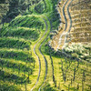 Douro Valleys Wine