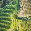Douro Valleys Wine